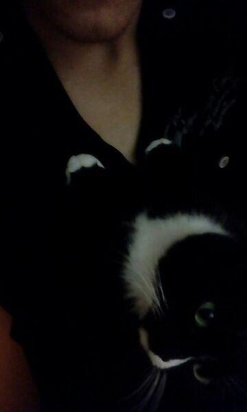 ���� ������� CatsNeverDie, �����, ������, 18